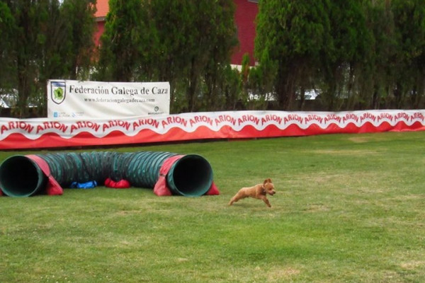 CLASES AGILITY (2)
